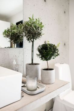 plante in baie