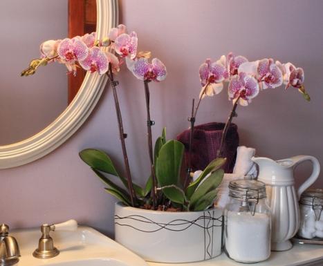 planta-orhidee-in-baie1