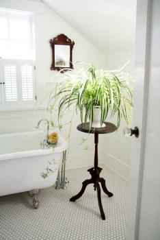 Baia, oaza de verdeață - Decorațiuni cu planta paianjen pentru baie